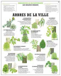Planches Arbres