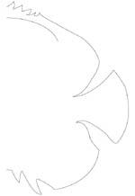 motif poisson 2
