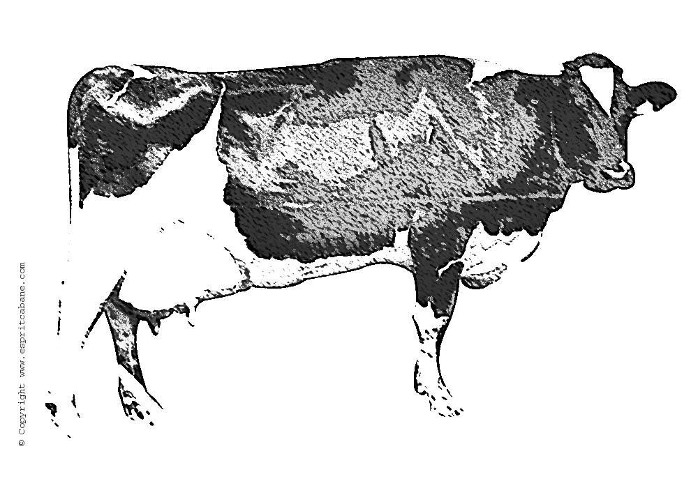 motif vache