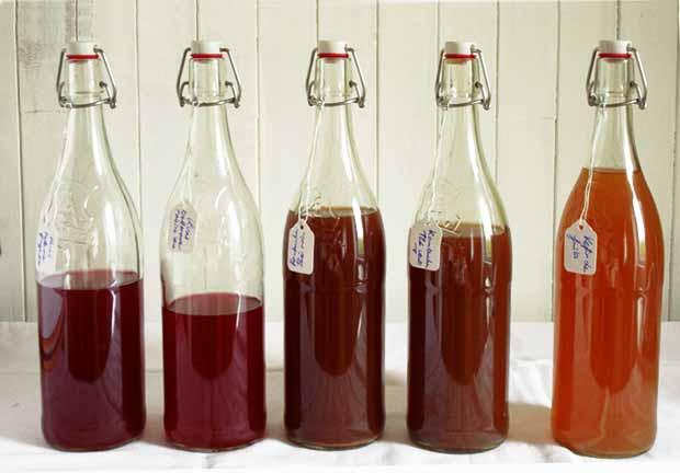 Santé : Découvrir 3 recettes de boissons fermentées