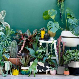 Déco : Faites entrer la nature dans la maison