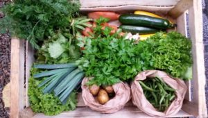 Bio et local : 10 (bonnes) raisons de s'abonner à un panier de légumes