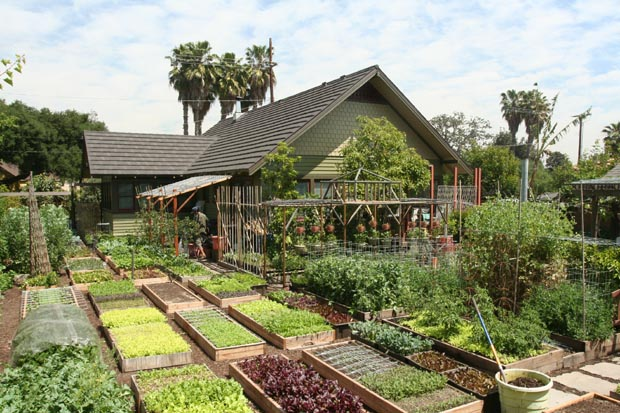 La permaculture ou cultiver habiter travailler autrement for Jardin urbain permaculture