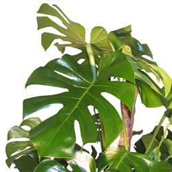 Plantes anti-pollution