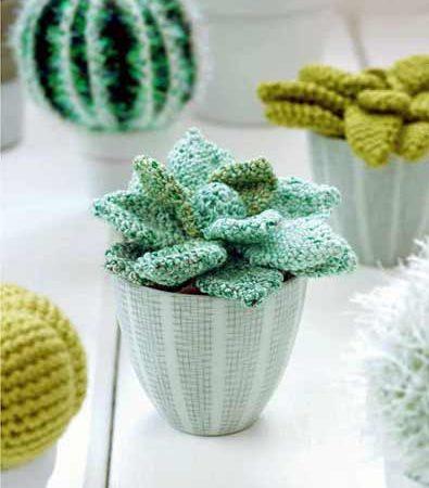 Plant Addict ? Créez une succulente au crochet !