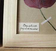 herbier étiquettes