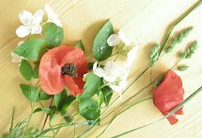 herbier fleurs fraiches