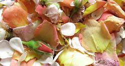 pot-pourri fleurs