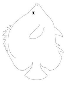 dessin poisson papillon-raye