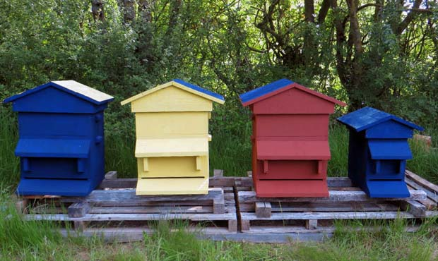 recette peinture ruches