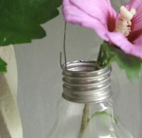 ampoule soliflore détail