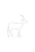 motif antilope