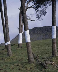land art tree line